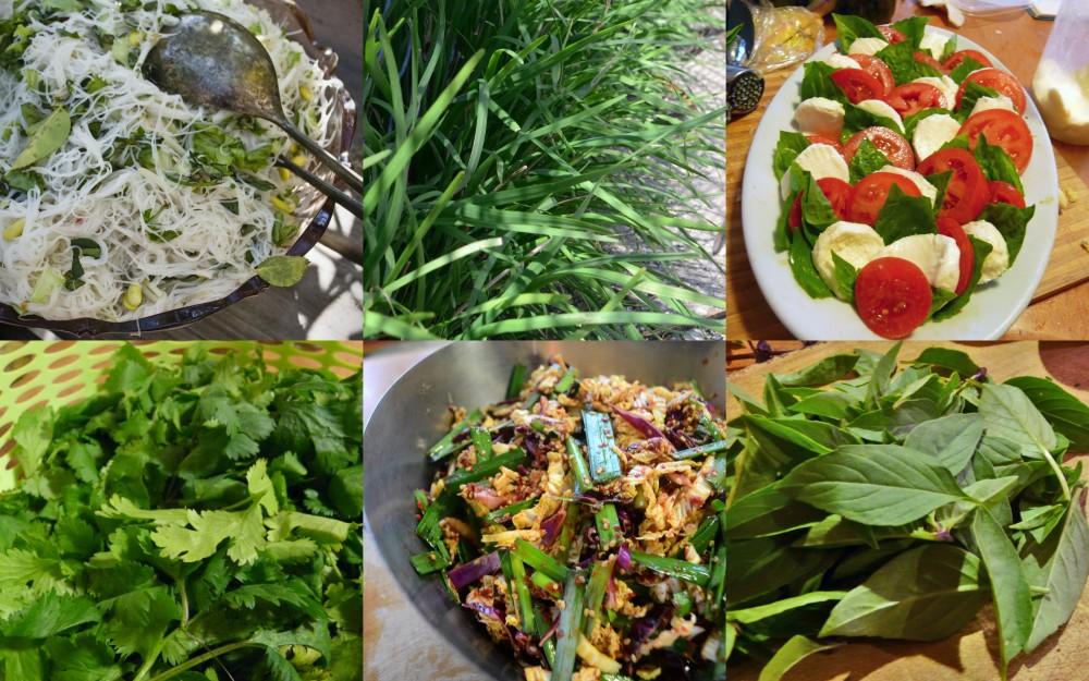 international-herb-salads